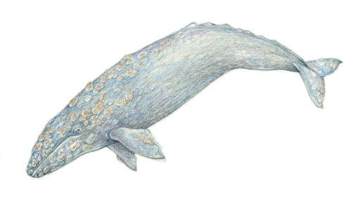 """gray - Joint Statement """"Retract the amendment to the ICJ compulsory jurisdiction agreement and withdraw from the implementation of the new research whaling plan"""""""