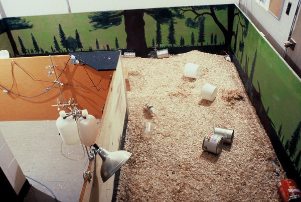 It's not the morphine, it's the size of the cage: Rat Park experiment upturns conventional wisdom about addiction
